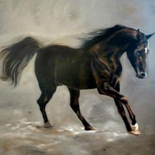 Cheval Persan - 200x200 - Huile sur toile - 2009